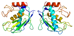 Protein MMP7 PDB 1mmp.png