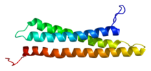 Protein STX12 PDB 2dnx.png