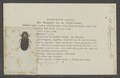 Psammobius - Print - Iconographia Zoologica - Special Collections University of Amsterdam - UBAINV0274 019 10 0150.tif