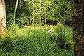 Puszcza białowieska fragmenty rezerwatu ścisłego a3.JPG