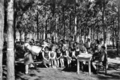 Queensland State Archives 2847 Lesson in the Slacks Creek State School Experimental Pine Plot 1946.png