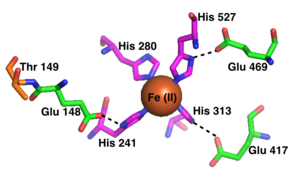 RPE65 - The RPE65 iron(II) cofactor, showing its coordination with 4 histidine residues and 3 glutamic acid residues.