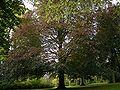 Radevormwald Bergerhof - Froweinpark 03.jpg