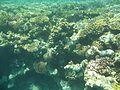 Rafa koralowa Hurgada (16).JPG