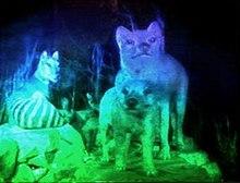 Holography - Wikipedia