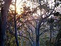 Rainforest Sunset - Flickr - gailhampshire.jpg