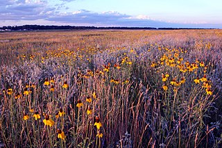 Northern mixed grasslands Temperate grasslands, savannas, and shrublands ecoregion of Canada and the United States