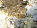Red sea-reef 4017.jpg