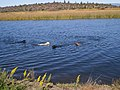 Redding, CA, USA - panoramio (10).jpg