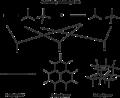 Reticular figure.png