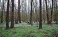 Rezerwat Polesie Konstantynowskie.jpg