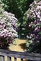 Rhododendronpark Bremen 20090513 036.JPG
