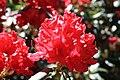 Rhododendronpark Bremen 20090513 233.JPG