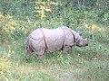 Rhonceros unicornis chitwan national park nepal 2005.jpg