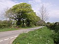 Road near Langstone Manor - geograph.org.uk - 421270.jpg