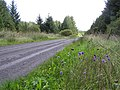 Road running through Altmore Forest - geograph.org.uk - 235956.jpg