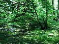 Rodenbeker Quellental mit Blick auf die Alster.jpg