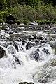 Rogue River (17607266601).jpg