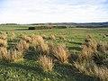 Rough grazing on Eglingham Moor - geograph.org.uk - 322691.jpg