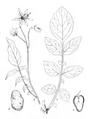 Roze fig.2 à 5.png