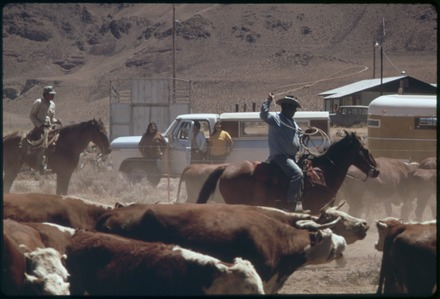 Spring roundup of Paiute-owned cattle begins at Pyramid Lake Indian Reservation, 1973. SPRING ROUNDUP OF PAIUTE-OWNED CATTLE BEGINS AT SUTCLIFFE PYRAMID LAKE INDIAN RESERVATION. CORALLING AND BRANDING IS... - NARA - 553104 color corrected.tif