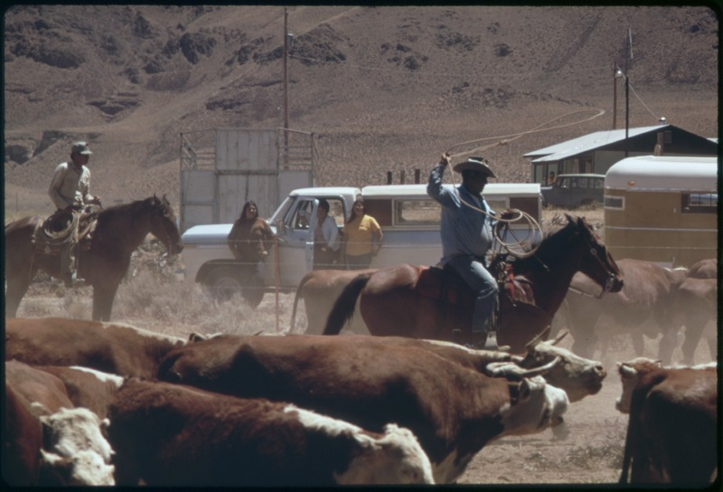 File:SPRING ROUNDUP OF PAIUTE-OWNED CATTLE BEGINS AT SUTCLIFFE PYRAMID LAKE INDIAN RESERVATION. CORALLING AND BRANDING IS... - NARA - 553104 color corrected.tif