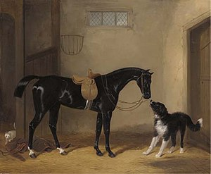 William Barraud - Portrait of a saddled black hunter with a sheep dog in a stable (1837)