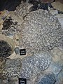 Saint-Jacut-les-Pins - Tropical Parc, musée des minéraux (07).jpg