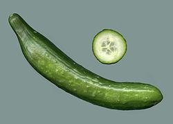 Salatgurke.jpg