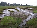 Saltmarsh at Warsash - geograph.org.uk - 1437719.jpg