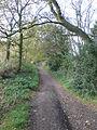 Sandstone Trail near Rawhead Farm - geograph.org.uk - 1562362.jpg