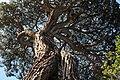 Sausalito, CA 94965, USA - panoramio (1).jpg