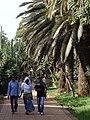 Scene along Promenade - Bahir Dar - Ethiopia (8681134890).jpg