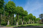 Schleswig-Holstein, Haseldorf, Naturdenkmal 24-02 NIK 4147.JPG