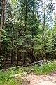Sciklieva reserve (Belarus, June 2020) 16.jpg