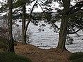 Scots pines - geograph.org.uk - 155120.jpg