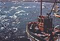 Seagulls (6288415153).jpg