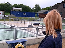 Seal Rehabilitation and Research Centre