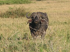 Serengeti National Park-108471.jpg