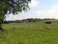 Sheep Farming near Upper Lambourn - geograph.org.uk - 25929.jpg