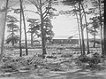 Sheep in pen with trees and farm building (AM 88042-1).jpg