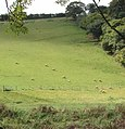 Sheep in the Camel valley, near Burlawn - geograph.org.uk - 51006.jpg
