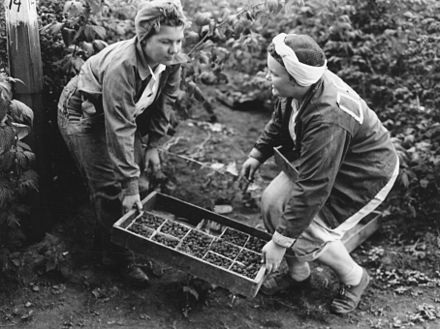 Teenagers harvesting berries in Boring in 1946 Shirley Gamble and Haroldine DeBord, 1946 (5836929896).jpg
