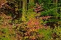 Siegen, Germany - panoramio (34).jpg