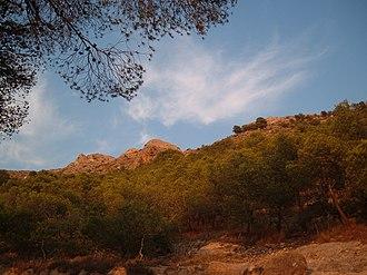 Villena - Sierra de la Villa mountain; close-up the pine grove, up in the right the Salvatierra castle ruins.