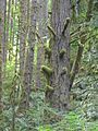 Silver Falls State Park 08.jpg