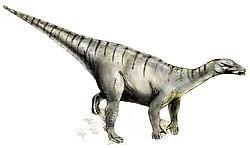 Iguanodon, un dinosaure du Crétacé inférieur.
