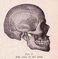 Skull Side View.jpg