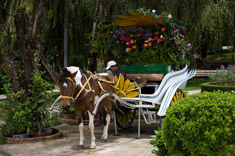 File:Sleeping Man with Horse and Carriage at the Dalat Flower Garden.jpg