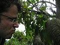 Sloth in San Lorenzo Panama.jpg